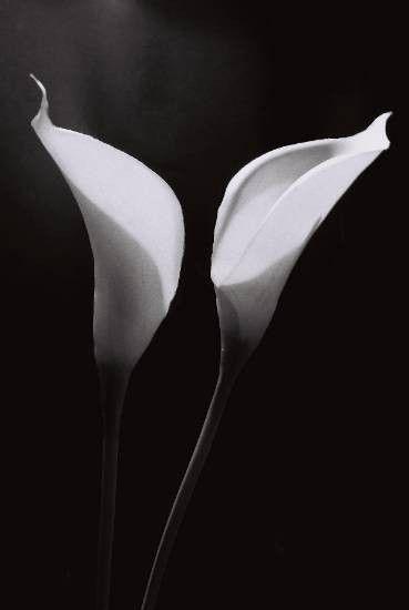 fleur d 39 arum noir et blanc. Black Bedroom Furniture Sets. Home Design Ideas
